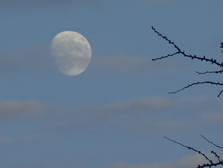 Moon_Over_Garden