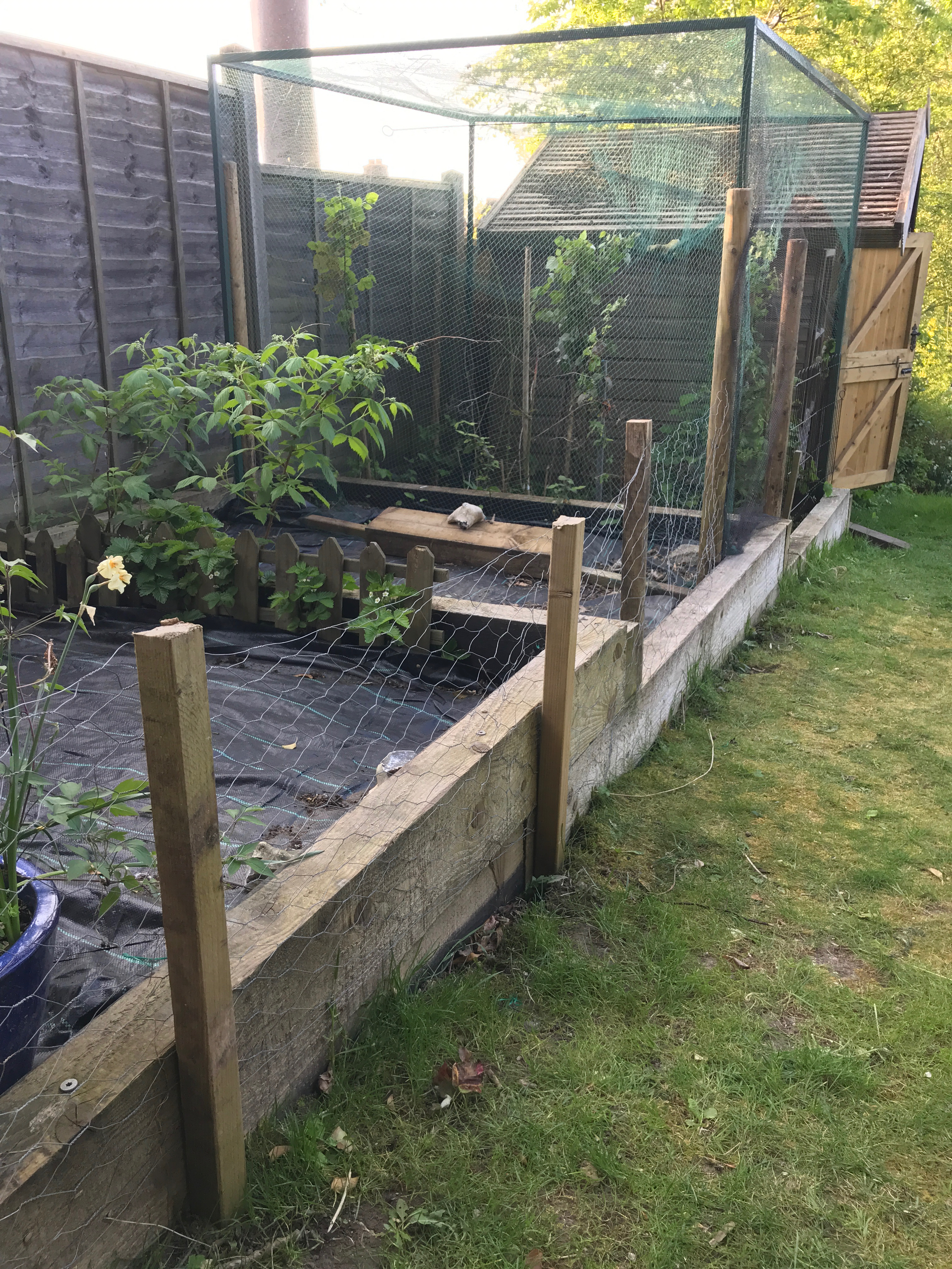 Raised beds and fruit cage prep'd